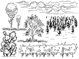 set of graphic line Illustration , the entourage of trees on a white background
