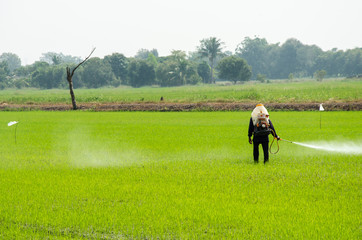 Pesticides from rice
