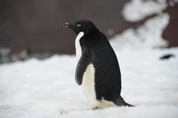 Fond de hotte en verre imprimé Antarctique Penguin close up Antarctica