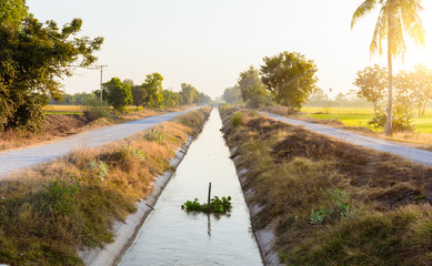 Irrigation canal, beside two paddy fields