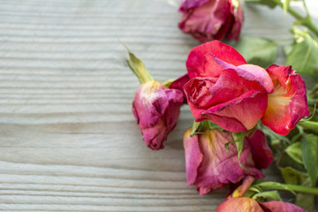 One withered red rose on the wooden background