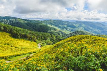 Thung Bua Tong Forest Park Doi Mae U-Kho