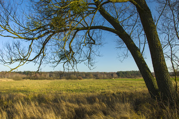 Big tree and wild dry grass on the meadow