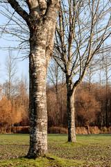 evening sun on winter park trees