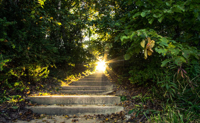 Light Of Heaven. Sunlight streams down a stairway that travels up through a scenic forest.