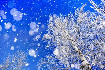 Photo sur cadre textile Bleu fonce 冬の白樺