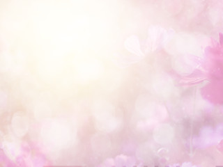 Fototapete - Abstract blurred cosmos flower and bokeh light with copy space for background