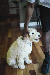 Man petting labradoodle puppy in kitchen