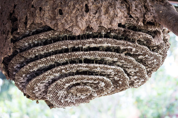 Close up image of the inside of a wasps nest with wasps