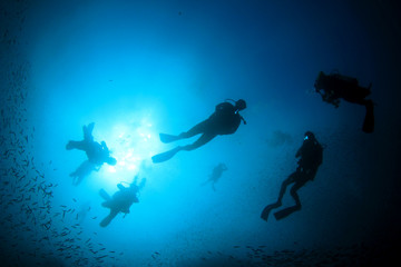 Scuba dive. Diving in ocean. Scuba divers explore coral reef