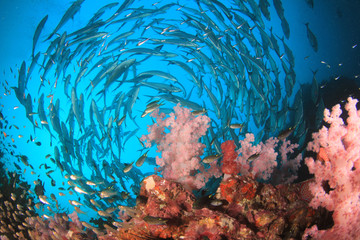Coral reef and fish in ocean