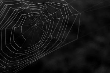 Black and White Macro Photography of a Natural Spider Web in Detail.
