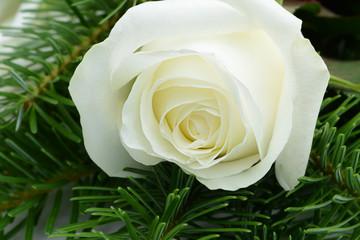 Blumen 862