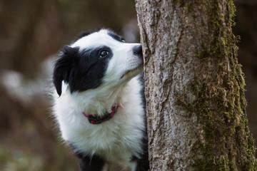 Welpe schnüffelt an einem Baum