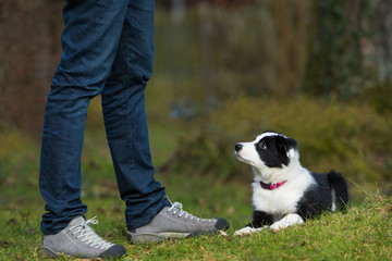 Border Collie Welpe macht Platz