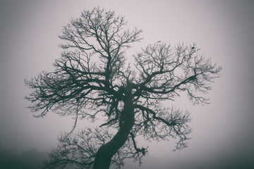 Bizarre tree in dense fog, misty background