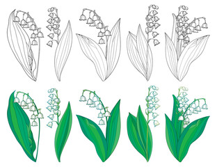 Vector set with outline Lily of the valley or Convallaria flowers and leaves in green and black isolated on white background. Ornate May bells in contour style for spring design or coloring book.