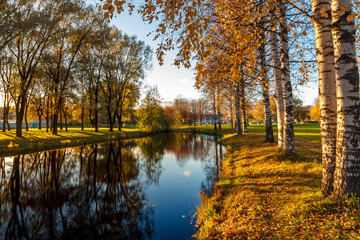 Walking in a bright sunny day among the golden trees by the lake, in the water reflection of the blue sky and golden leaves of trees