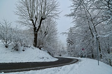 Winter picture of empty country road with trees covered with snow