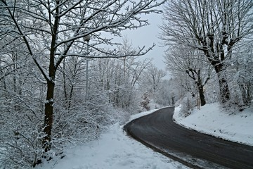 Winter scene of empty country road with trees covered with snow