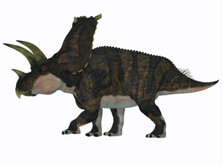 Bravoceratops Dinosaur Side Profile - Bravoceratops was a herbivorous ceratopsian dinosaur that lived in Texas, USA in the Cretaceous period.