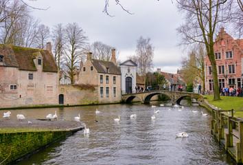 Free Swimming swans in Lake of Love Bruges Belgium