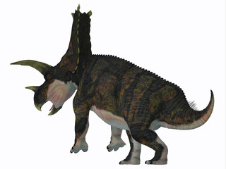 Bravoceratops Dinosaur Tail - Bravoceratops was a herbivorous ceratopsian dinosaur that lived in Texas, USA in the Cretaceous period.