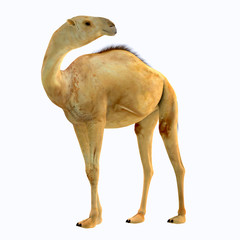 Camelops hesternus Side Profile - Camelops was a camel-type herbivorous animal that lived in North America during the Pleistocene Period.