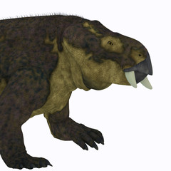 Placerias Dinosaur Head - Placerias was a herbivorous dicynodont dinosaur that lived in Arizona, USA in the Triassic Period.