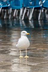 Impressionen aus Venedig - Möwe am Markusplatz