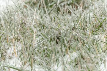 frozen grass in ice