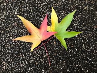 Zwei Herbstblätter auf geteertem Hintergrund