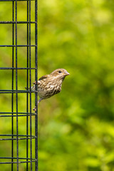 sparrow landing on the cage of bird feeder under the sun with blur green background