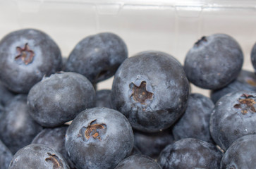 Blueberries Close Up 3