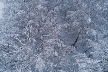 Aerial view over snowy forest tree tops, during misty winter day in Lithuania, Europe. Every tree branch covered in full snow.