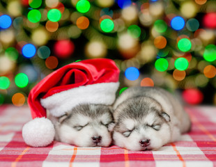 two sleeping puppies with christmas hat  on a background of the Christmas tree
