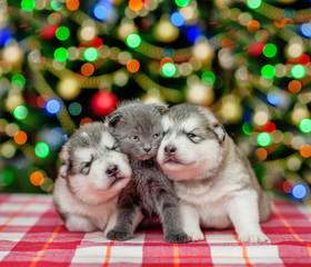 playful puppies with a kitten  on a background of the Christmas tree