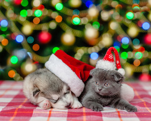 Kitten and sleeping puppy in red christmas hats on a background of the Christmas tree