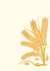 Wheat ears - isolated on light background - art vector