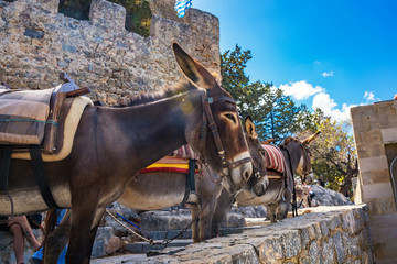 Donkey taxi – donkeys used to carry tourists to Acropolis of Lindos (Rhodes, Greece)