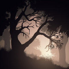 Square vector illustration within forest.