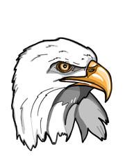 eagle portrait realistic illustration drawing  white background