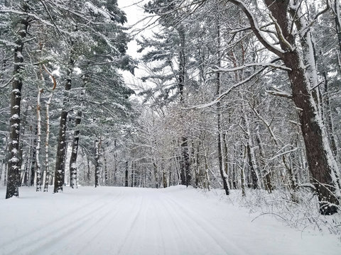 snow covered road in Michigan woods