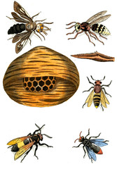 Illustration wasps, bees and bumblebees.