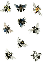 Illustration wasps, bees and bumblebees.