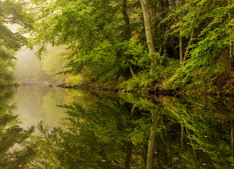 River autumn foggy morning. Amazing seasonal colors and trees reflection in the water
