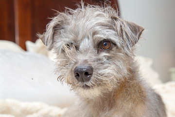 Funny Dog With Messy Bed Head