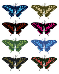 Illustration of colored butterflies on a white background, vector