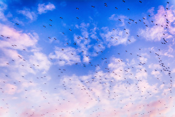 Blue sky, clouds and flock of birds