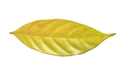 Green leaf on white background (included clipping path)
